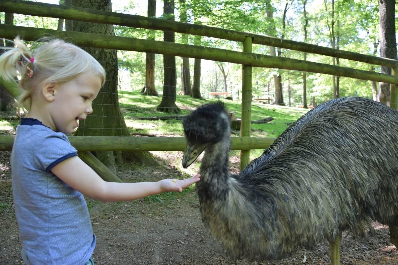 Wildpark Daun Emu voeren