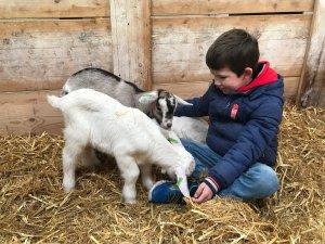 Mekkerstee geitenboerderij