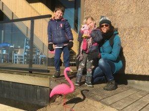 Flamingo Brouwersdam roze zondag