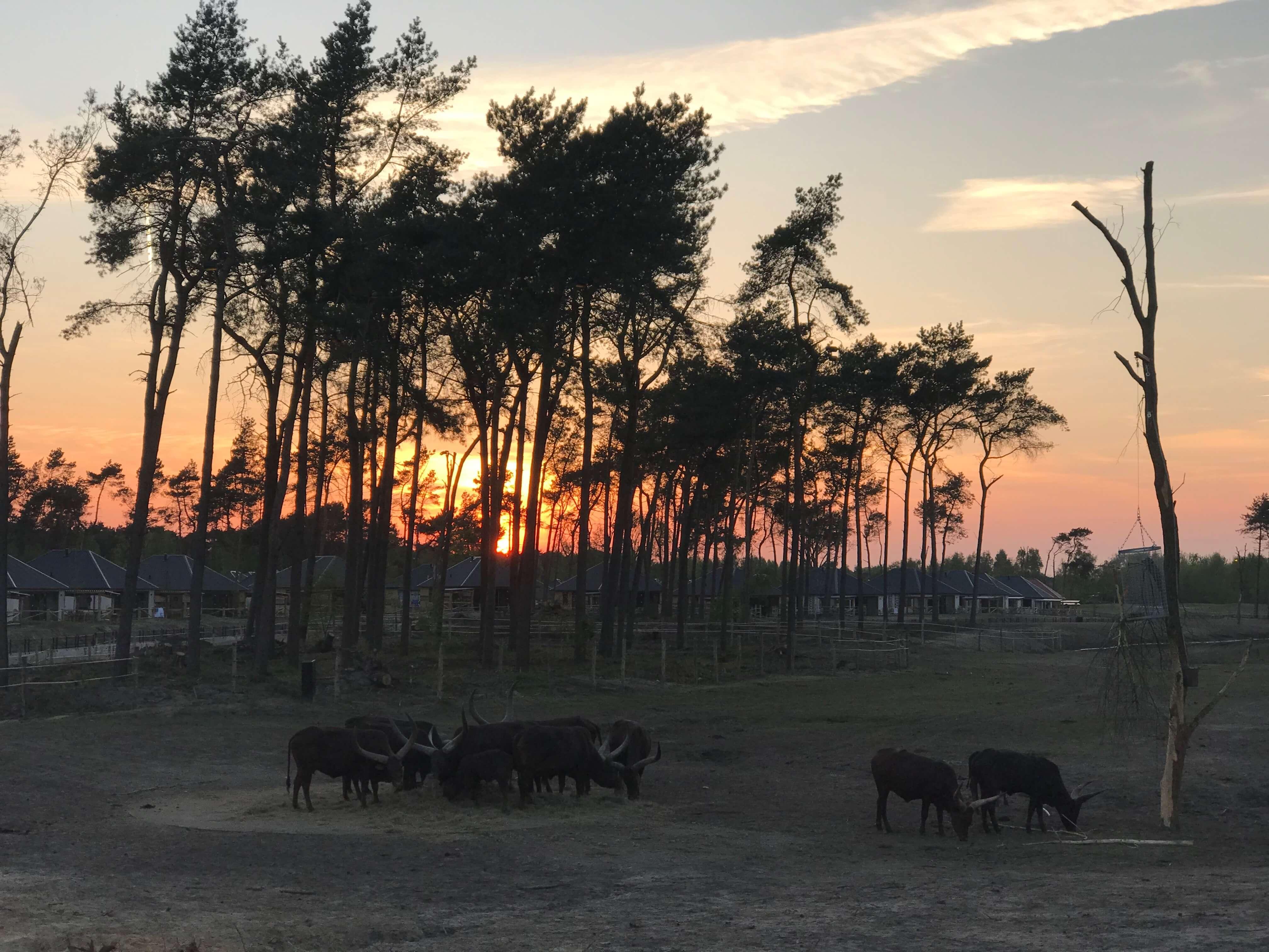 Beekse Bergen, de avond valt over de Serengeti